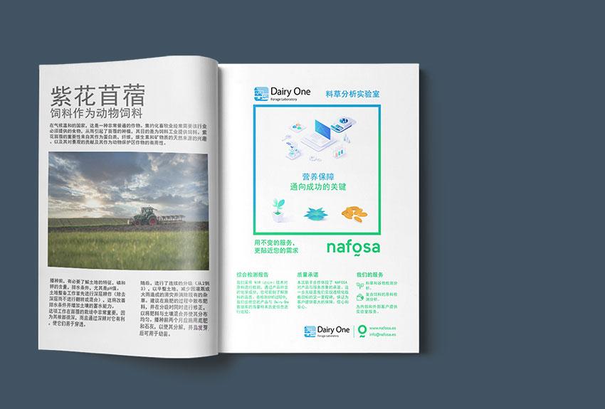 Proyectos de comunicación y publicidad para la internacionalización de productos en asia China Japón Corea Qatar en Navarra y Pamplona en España